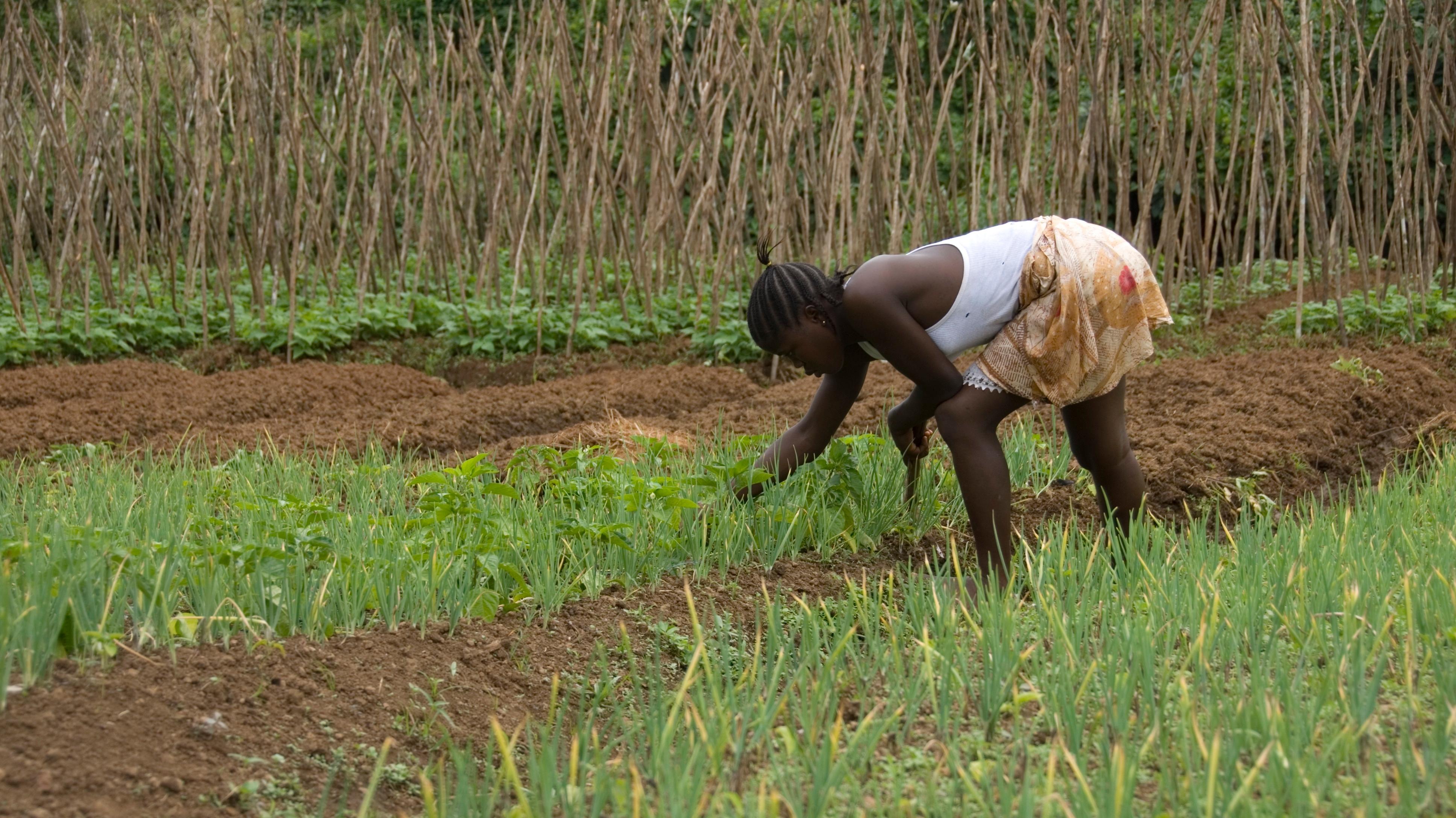 Ebola l urgence de la relance de l agriculture en guin e for L agriculture
