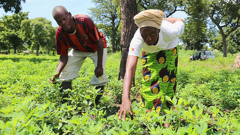 """Résultat de recherche d'images pour """"agriculture au Tchad"""""""