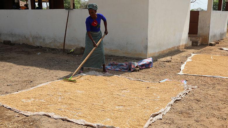 À elle seule, l'UFER-C compte aujourd'hui près de 800 étuveuses réunies au sein de 67 coopératives villageoises. Photo : Gnona Afangbedji, Banque mondiale